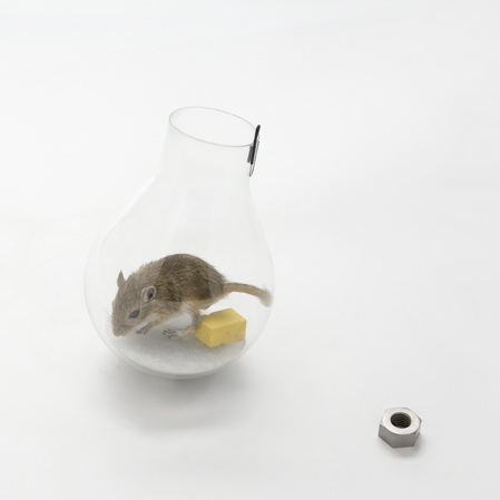 mouse-in-a-lightbulb_sq