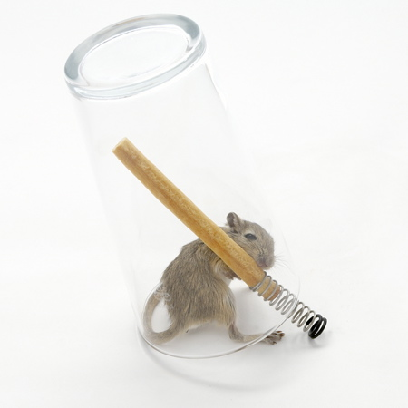 mouse-in-a-pint-1-web_sq